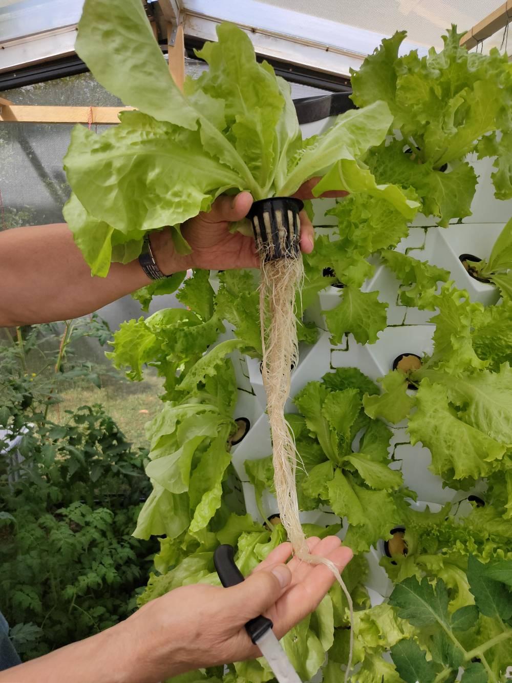 Gesunde Wurzeln, der Garant für gesunde Pflanzen!