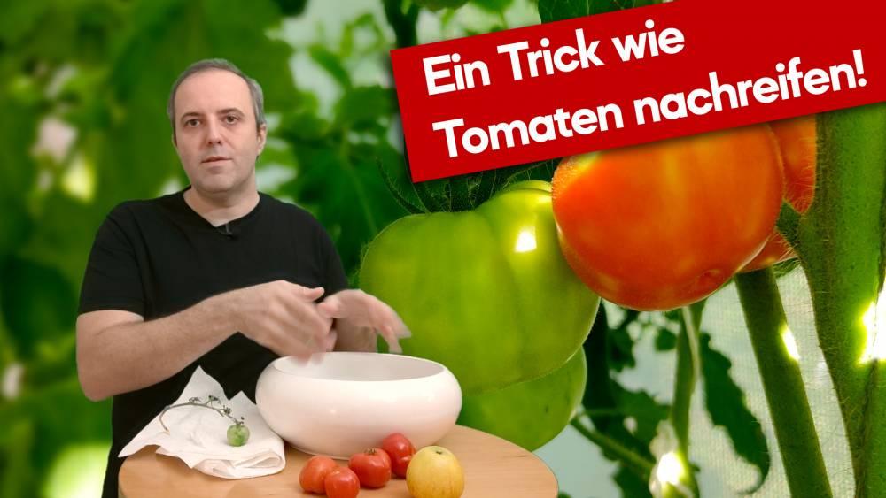 Wie ich meine Tomaten rot bekommen habe.